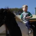 lad-on-pony